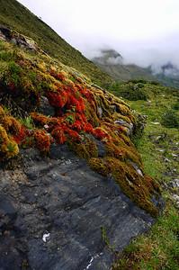 Travel Peru 2