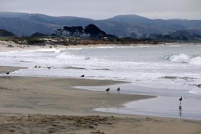 Coastal 7