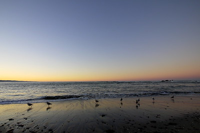 Coastal 13