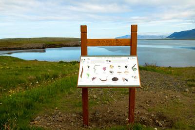 Fallegur sumarmorgun við Gorvík sem blasir við af 8. teignum. Þetta upplýsingaskilti var sett upp af Reykjavíkurborg fyrr í vor og segir frá lífríkinu í fjörunni.