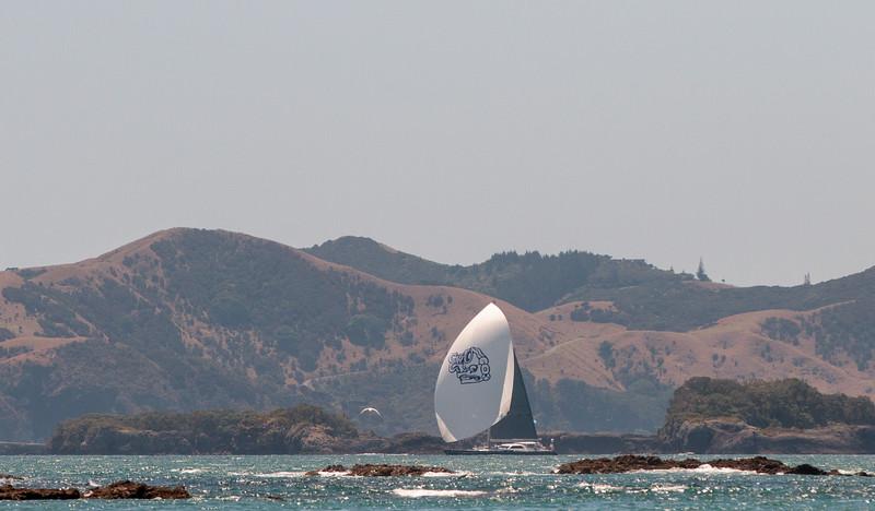 Gill_2020_NZ-52-2