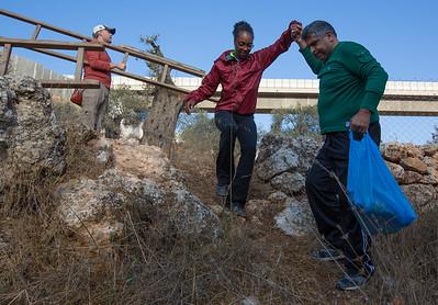 160830 olive harvest Beit Jala