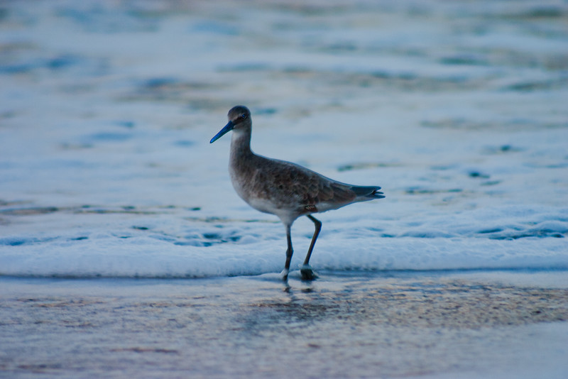 Early Morning Bird on the Beach