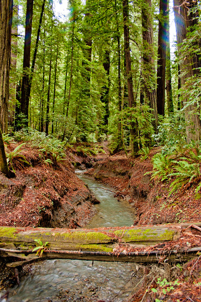 Nature's Bridge in the California Red Woods