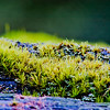 Moss in Northern California