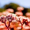 Macro Flower in Cape Town