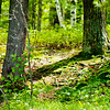 Forest Floor in Michigan