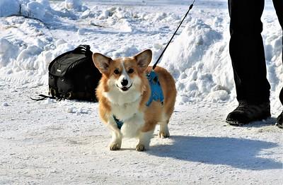 Bessie the wonder dog!