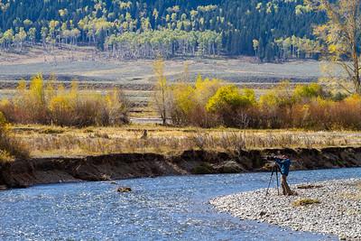 Zen Cottonwood Soda Butte Creek Yellowstone National Park WY  IMG_1312