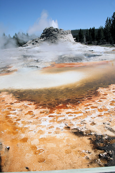 Buffalo tracks and Castle Geyser