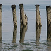 Old Ferry Pilings