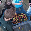 Making and Tasting our Own Cider