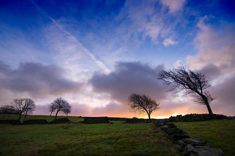 Cragg Vale Trees