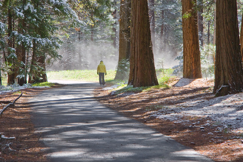A morning walker, Yosemite