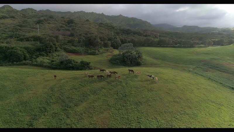 circling horses-converted