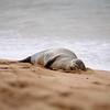 seal basking-converted