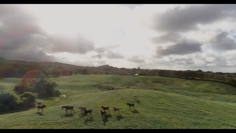 final circle horses-converted