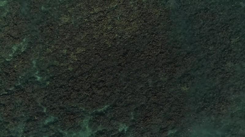 Hanalei coral BEST