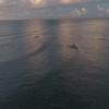 Hanalei Bay Dusk surfing