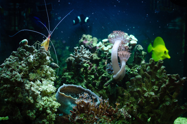 my mini reef