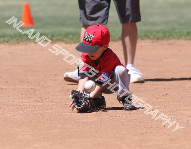 Muckdogs vs Raptors T-Ball