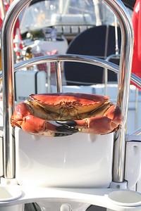 Crab skipper