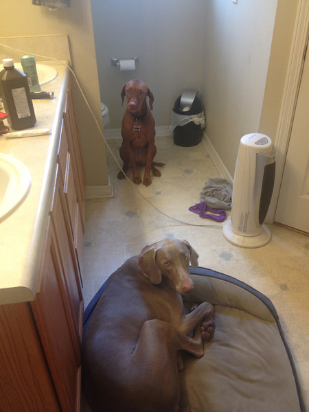 These girls demand to be in the bathroom with me.  This is them waiting for me to get out of the shower.  {January 03, 2013}