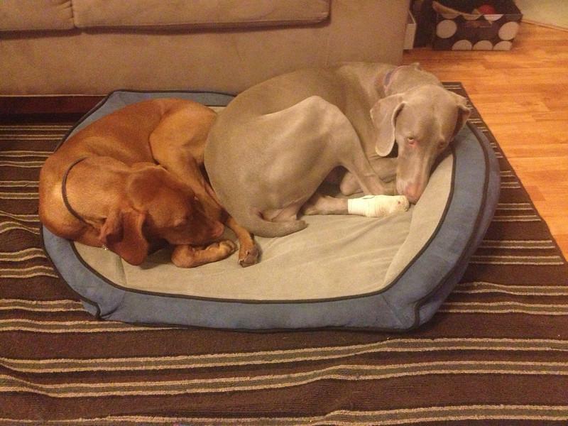 Cuddling before taking Yadi to the vet  {January 03, 2013}