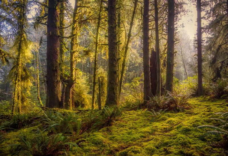 Deep Forest 112419