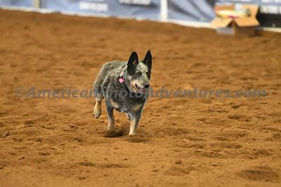 Dog Race_20180727_0009