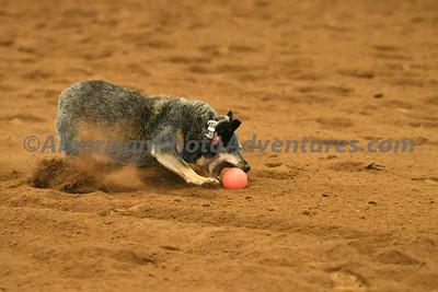 Dog Race_20180727_0015