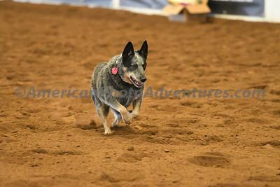 Dog Race_20180727_0010