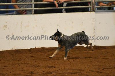 Dog Race_20180727_0024