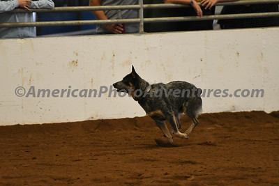 Dog Race_20180727_0025