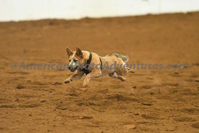 Dog Race_20180727_0038
