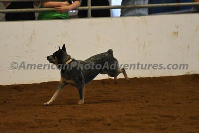 Dog Race_20180727_0028