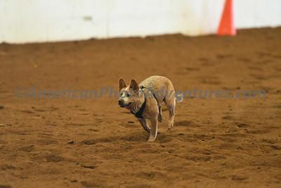 Dog Race_20180727_0036