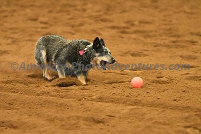 Dog Race_20180727_0014