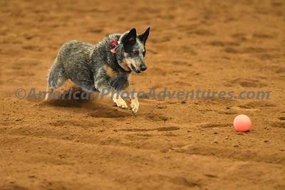 Dog Race_20180727_0013