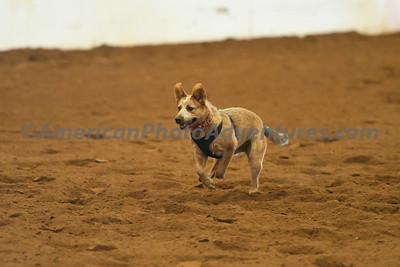 Dog Race_20180727_0037