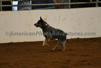 Dog Race_20180727_0026