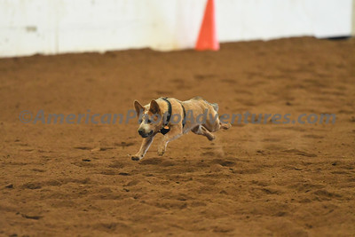 Dog Race_20180727_0035