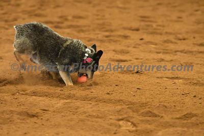 Dog Race_20180727_0016