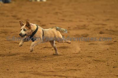 Dog Race_20180727_0041