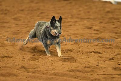 Dog Race_20180727_0011