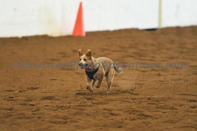 Dog Race_20180727_0034