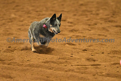 Dog Race_20180727_0012