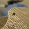 crazy jumping spider