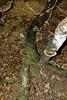 Fungi on the rainforest floor