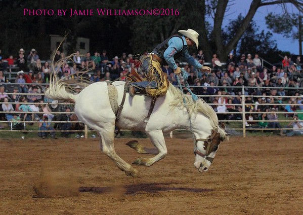 Open Saddle Bronc